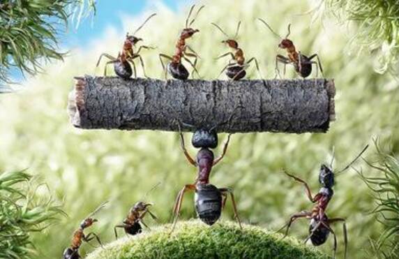 蚂蚁精神.jpg